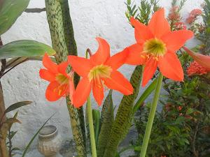 Flores do meu jardim - Duas amigas