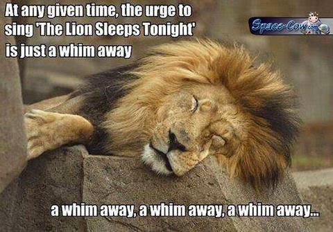 funny cute lion humor