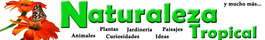 Naturaleza Tropical