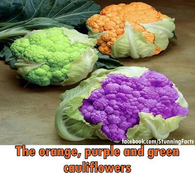 The orange purple green cauliflower