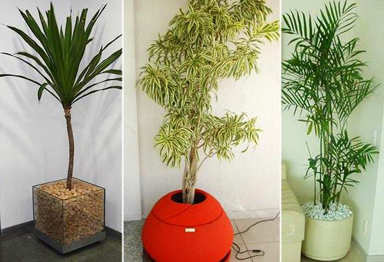 Vanderlei paisagista plantas e vasos para interiores for Casas decoradas con plantas naturales