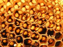 mleczko pszczele forever