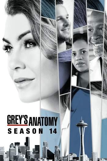 Grey's Anatomy 14ª Temporada Torrent – WEB-DL 720p Dual Áudio