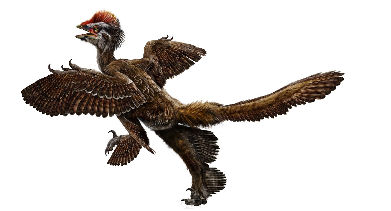 dinossauro-de-penas.jpg