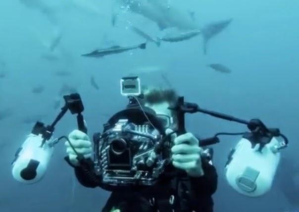fotografer foto bareng hiu