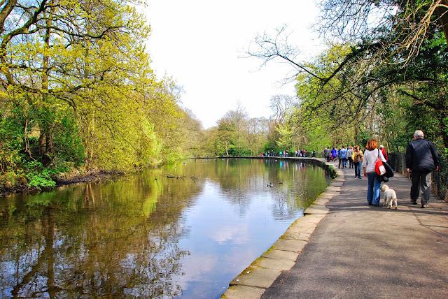 Sheffield Duck Race