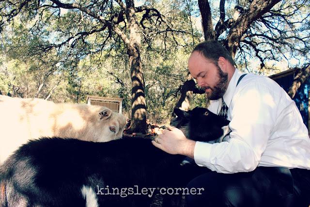 Dwarf Nigerian whether, dwarf nigerian doe, texas goats