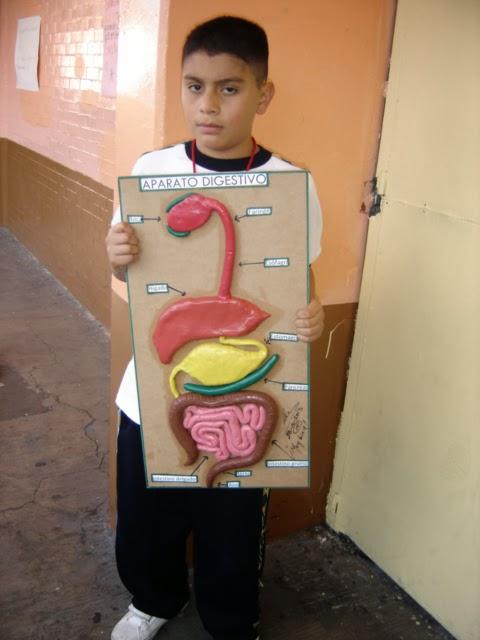 CIENCIAS I ( BIOLOGIA ): MAQUETAS APARATO DIGESTIVO