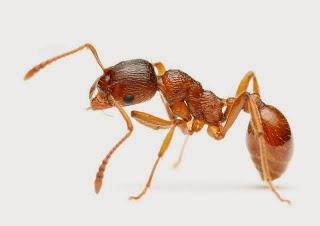 Datos sorprendentes sober la hormiga.