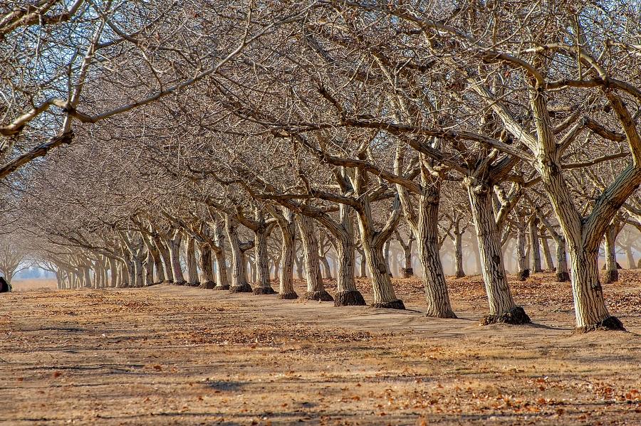 Identifying trees by their winter 'bones'