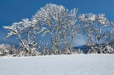 Photo of some trees covered by snow against a blue sky background