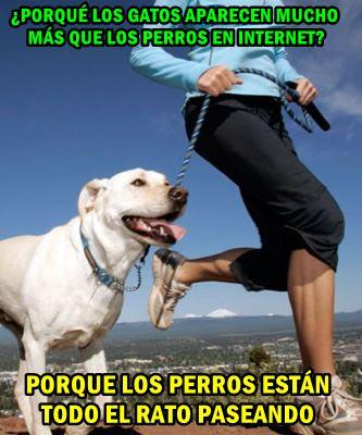 perros-paseando