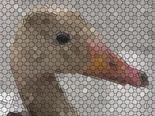 Mosaico de la cara de un ganso que parece estar tras una malla metálica. Composición: Selene Garrido Guil. ©Selene Garrido Guil