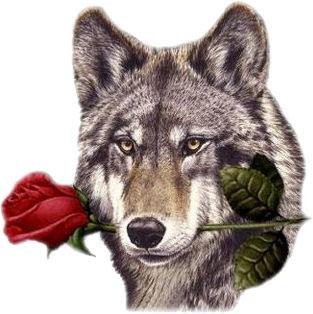 Imagen de un lobo con una rosa en la boca