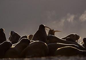 Fakta Tentang Kutub Selatan [ www.BlogApaAja.com ]