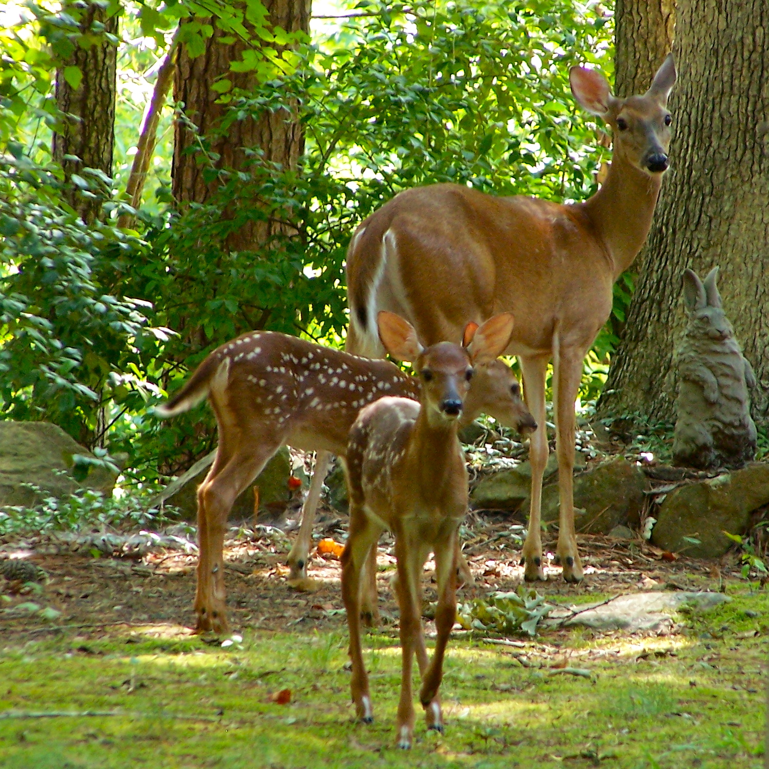 Green Place Deer And Fawns