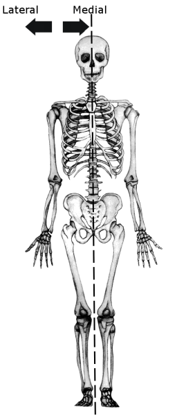 Radiologia Básica: Regiones anatómicas
