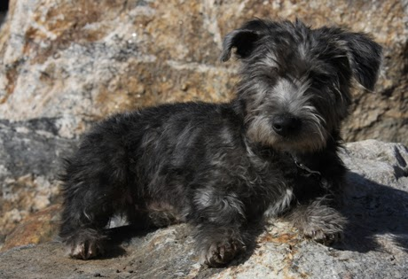Small Dogs For Sale In Ri