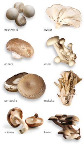 mushroom names list and pictures pdf