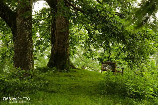 Bosque en Escocia