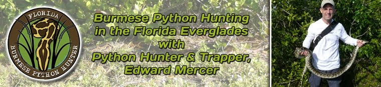 Python Snake Hunting in the Florida Everglades