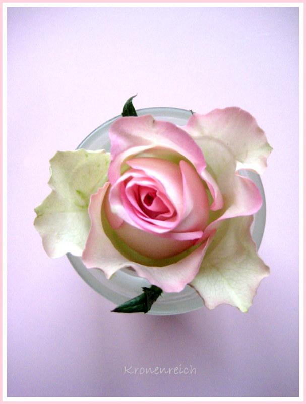 Ich liebe Rosen