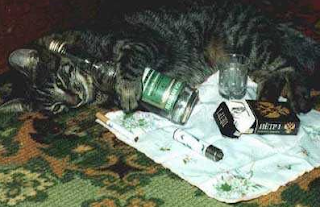 funny picture: cat with beer