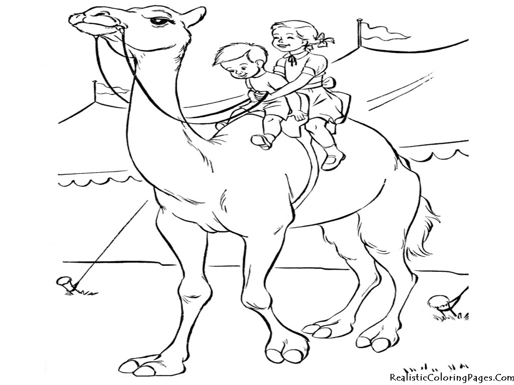 camel coloring pages realistic coloring pages