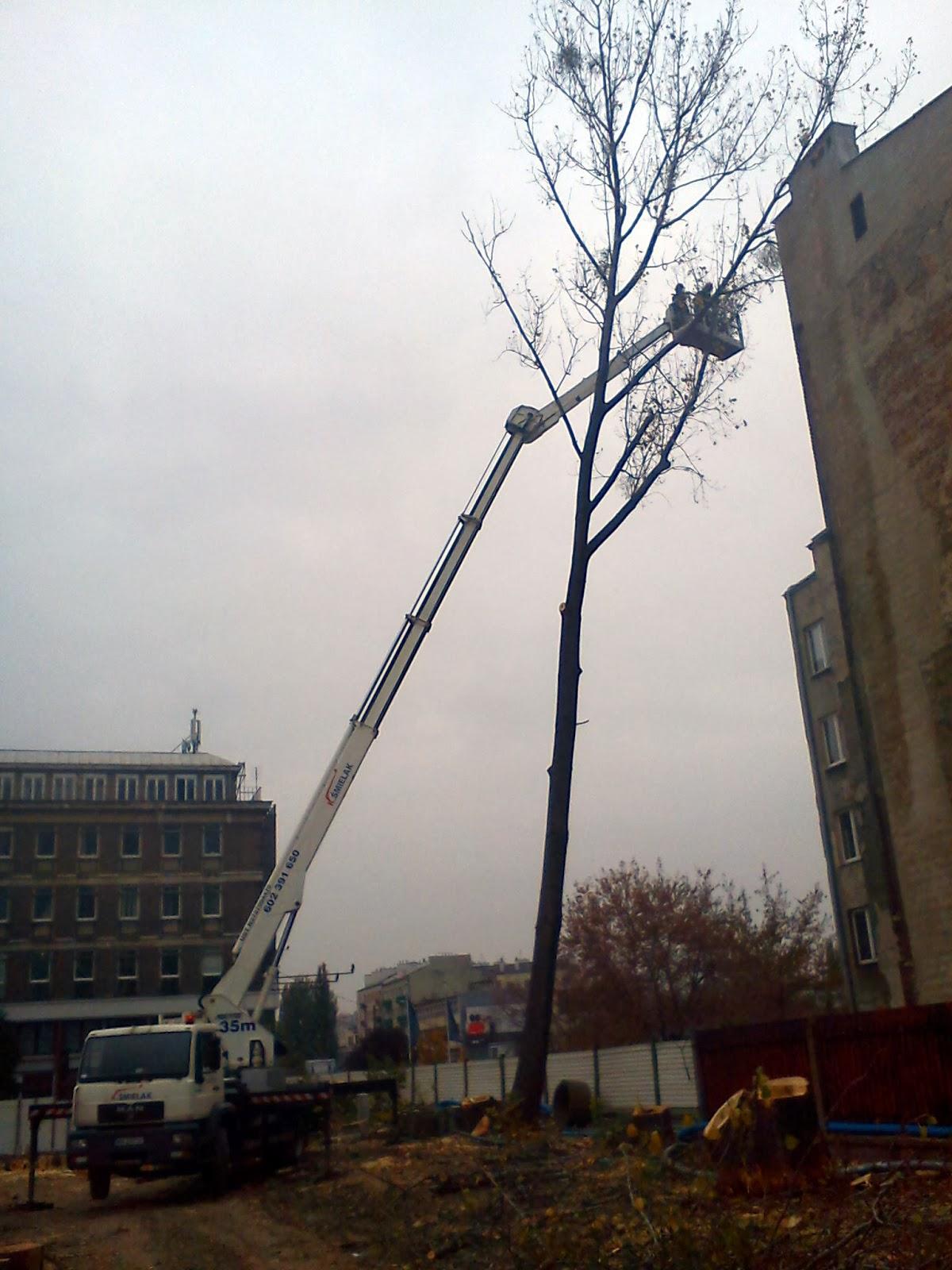 Wycinka drzew z podnośnika, Warszawa, Ghelamco
