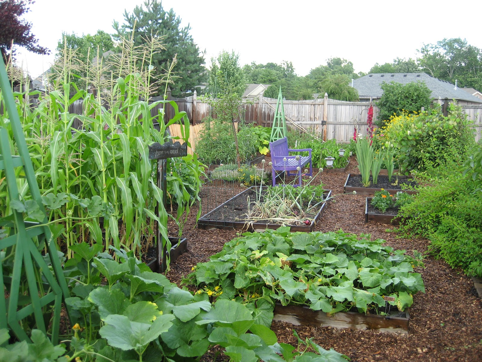 My vegetable garden at its peak a few years ago