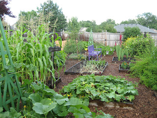 My vegetable garden at its peak a few years ago.