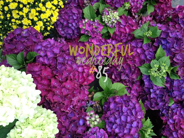 Wonderful Wednesday #85