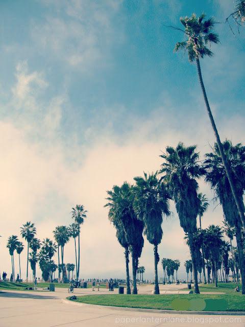 Venice Beach-- Palm Trees