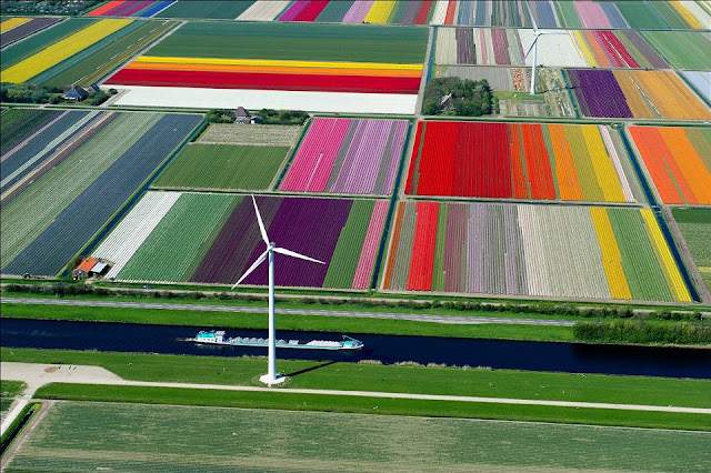 Tulip Farm - Netherlands via True Activist, aerial photography