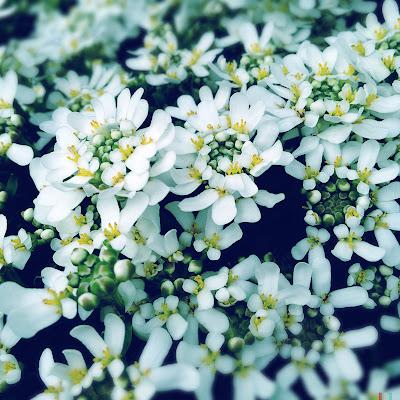 white yellow green hipstamatic