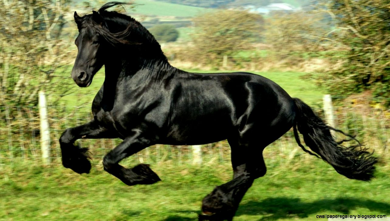 Black Horse HD desktop wallpaper  High Definition  Fullscreen
