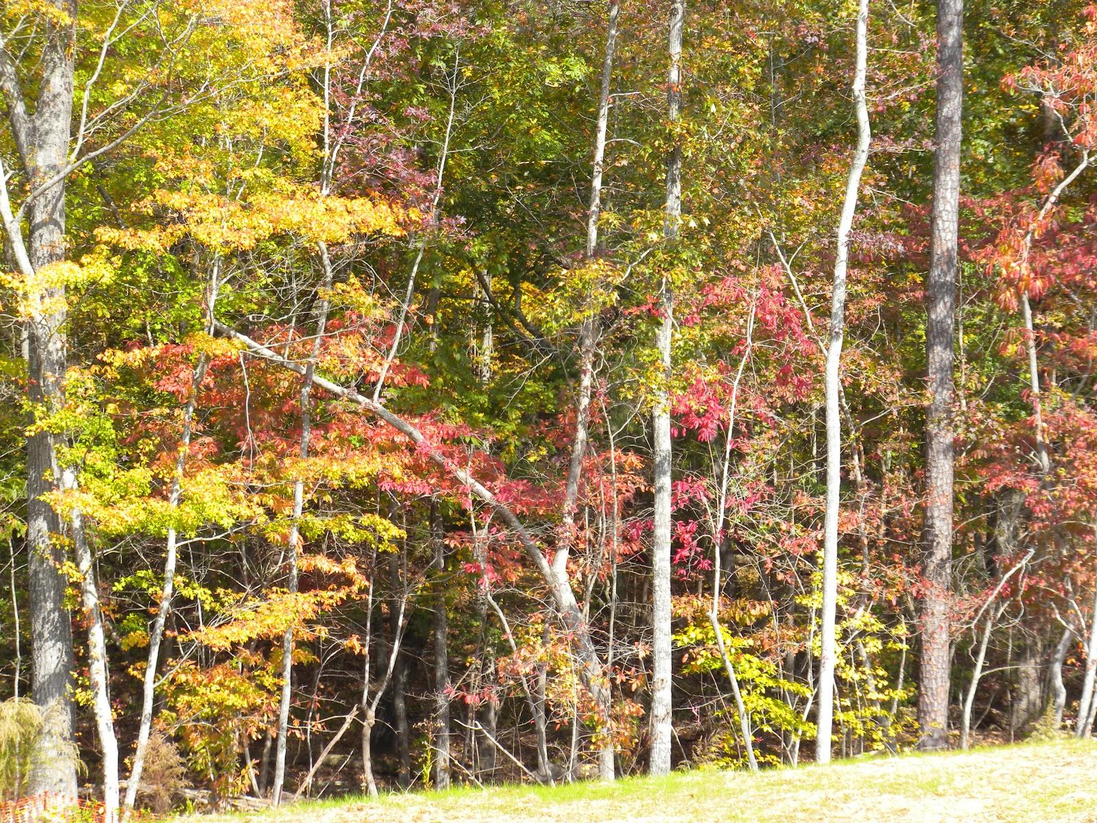 Fall in the Carolinas
