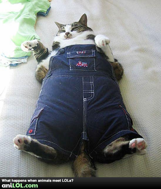 Funny Fat Cat Overalls