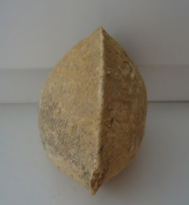 Fossil Sea Shell