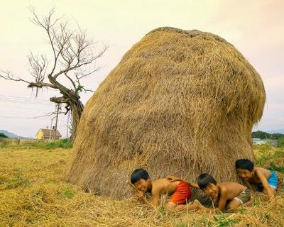 Ảnh đẹp làng quê Việt Nam