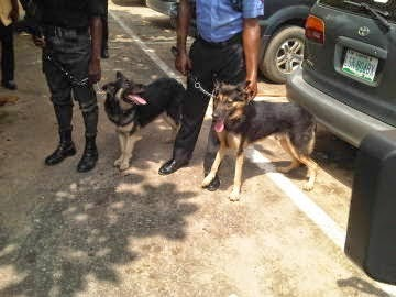 dogs arrested igando lagos