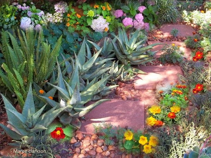 Tuinmaak in suid afrika medisyne uit jou tuin aloe ferox for Klein tuin uitleg