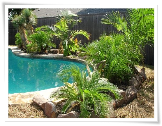 Landscape design online backyard landscaping ideas for Landscape design for pool areas