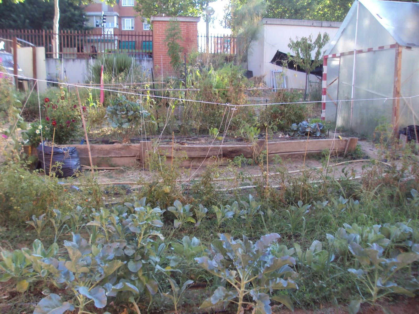 En torno al huerto el huerto escolar como recurso educativo for Plantas beneficiosas para el huerto
