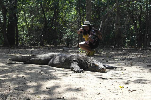 ทริปล่ามังกร โคโมโด อุทยานแห่งชาติโคโมโด อินโดนีเซีย
