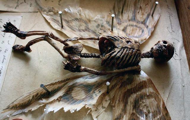 Corps de créatures mythiques étranges trouvées dans le sous-sol d'un hôtel particulier au Royaume-U