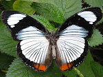 I love *butterflys*