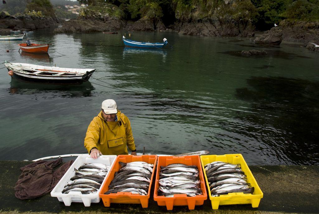 A pesca do día
