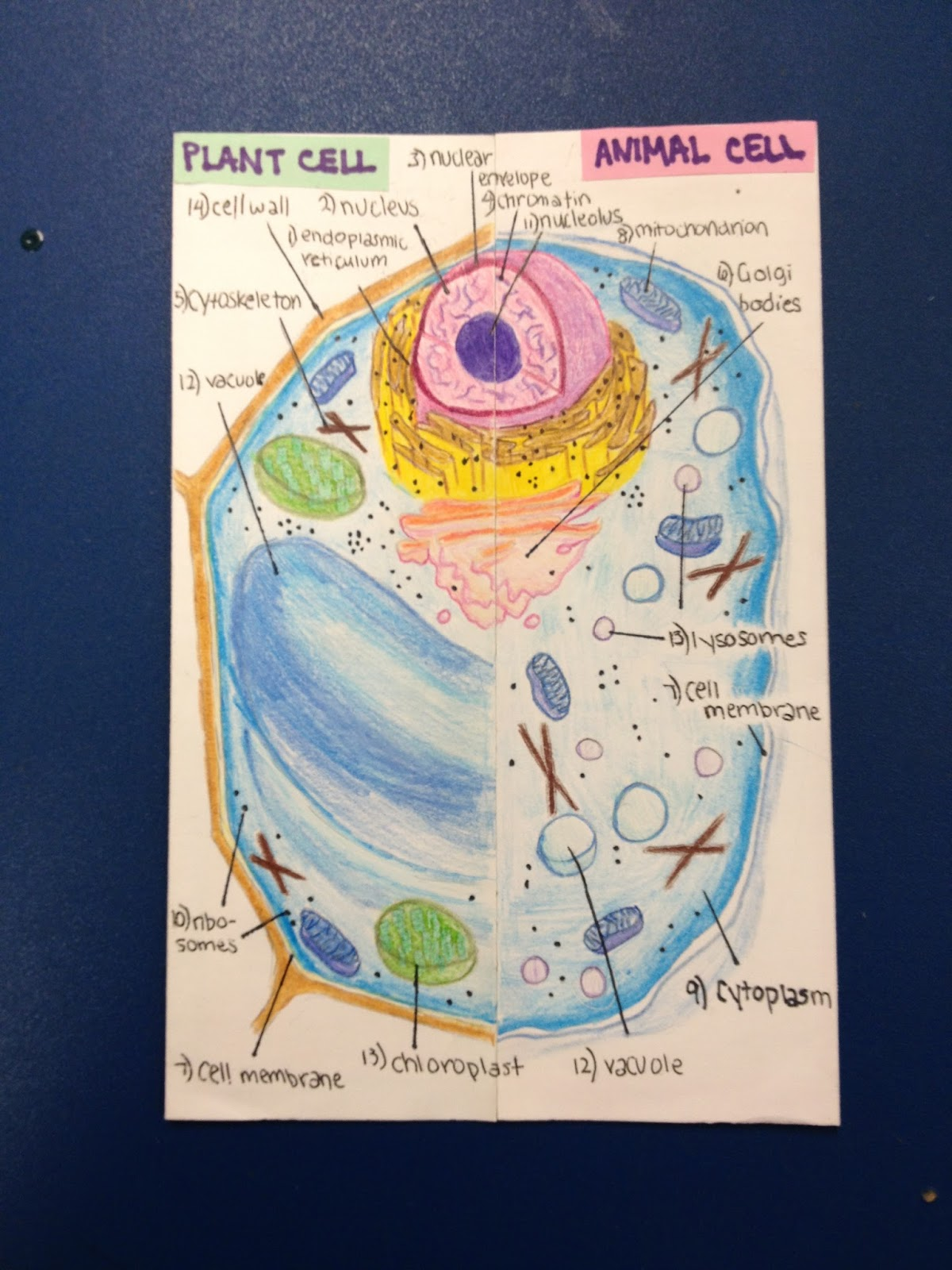 All About Cells!!!! - Lessons - Tes Teach