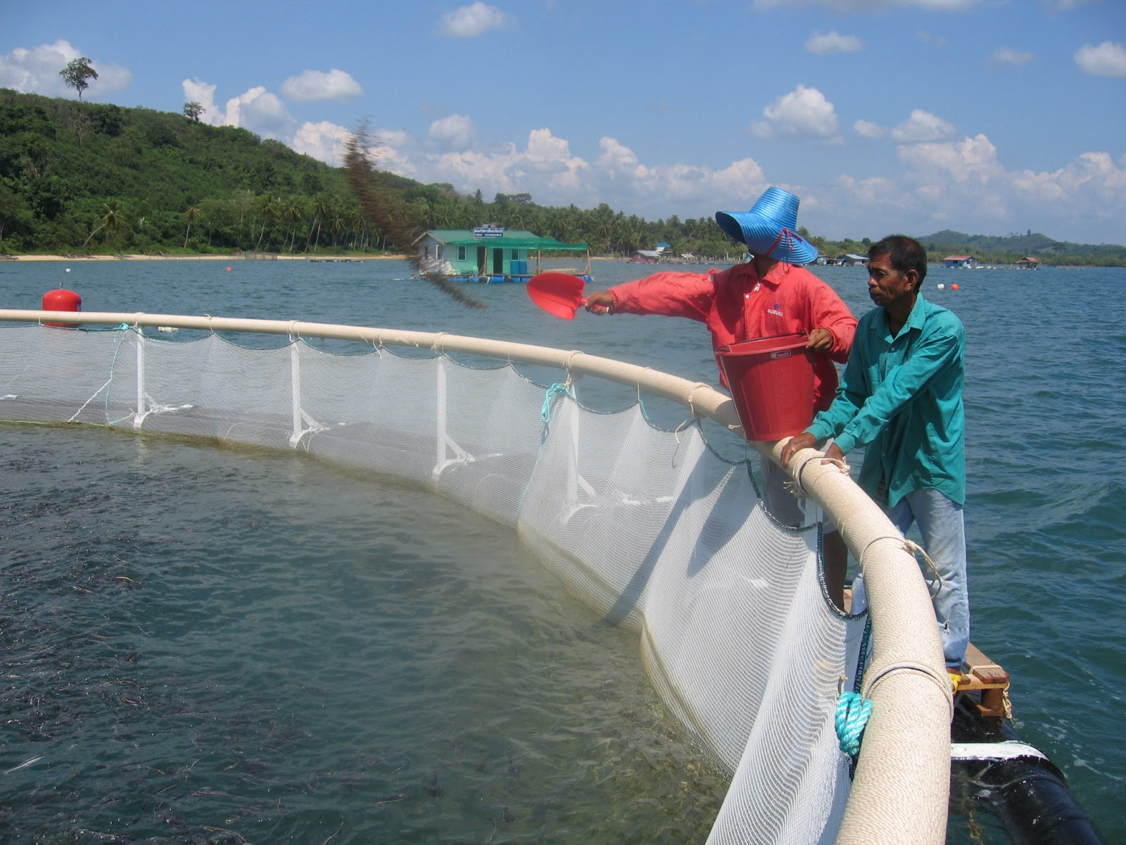 Do your homework better and faster for How to start fish farming
